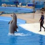 malta pływanie z delfinami