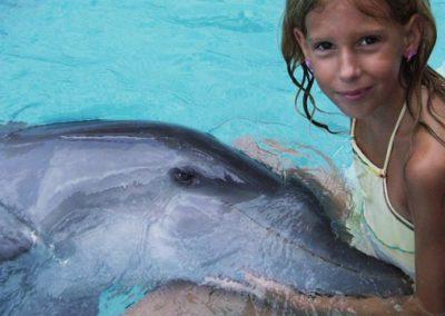 dolphin3-1024x360