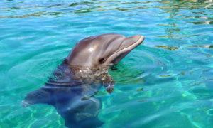 Pływanie z delfinami w Izraelu – Ejlat