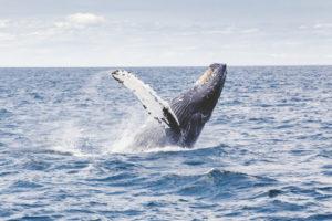 Meksyk pływanie z delfinami Puerto Vallarta