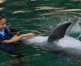 pływanie z delfinami