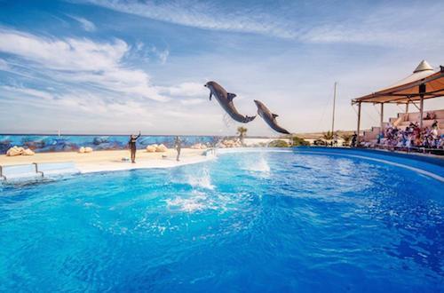 pływanie z delfinami na Malcie